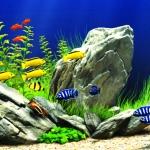 Kỹ thuật và kinh nghiệm nuôi cá không bị chết